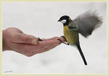 Акция «Помоги зимующим птицам»